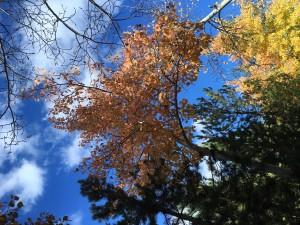 Fall at Squaw