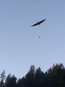 The Blue Heron 3