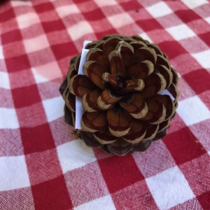 Pinecone with things that no longer serve